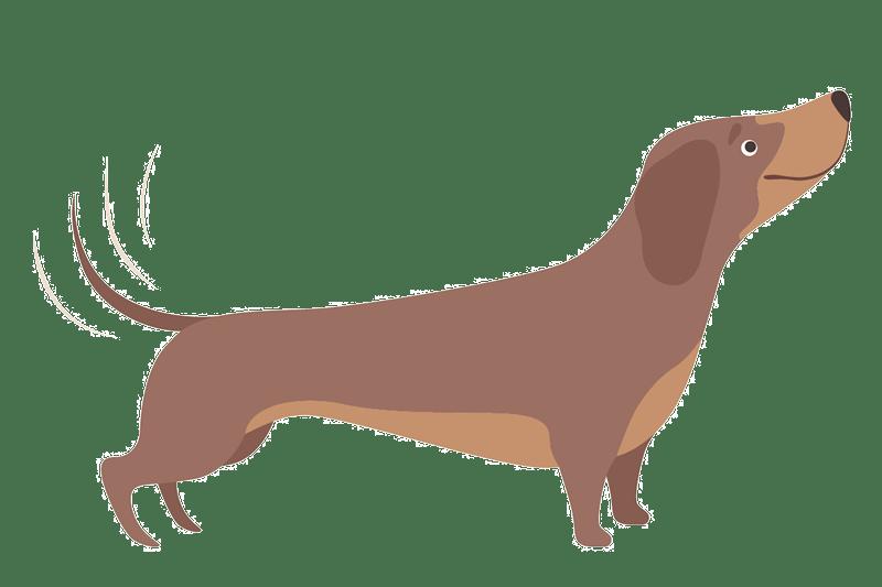 dachshund-wag-graphic